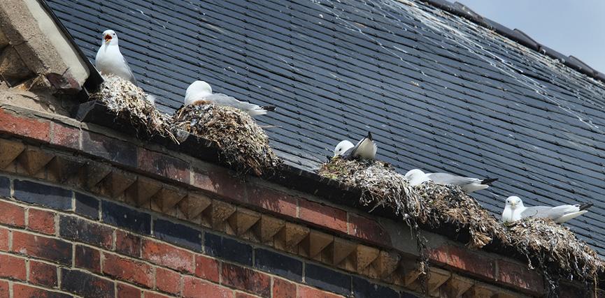 Sistemas Para Evitar Que Las Aves Aniden En Los Canales Pluviales